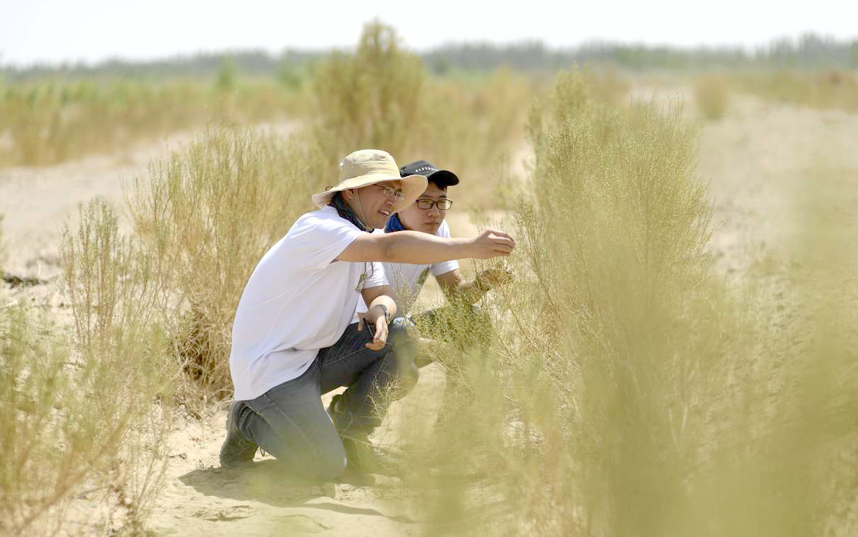Alipay users plant Ant Forest trees in desert_04222019