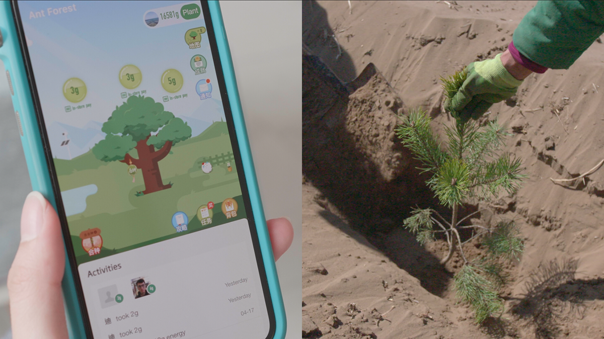 Ant Forest app and planting