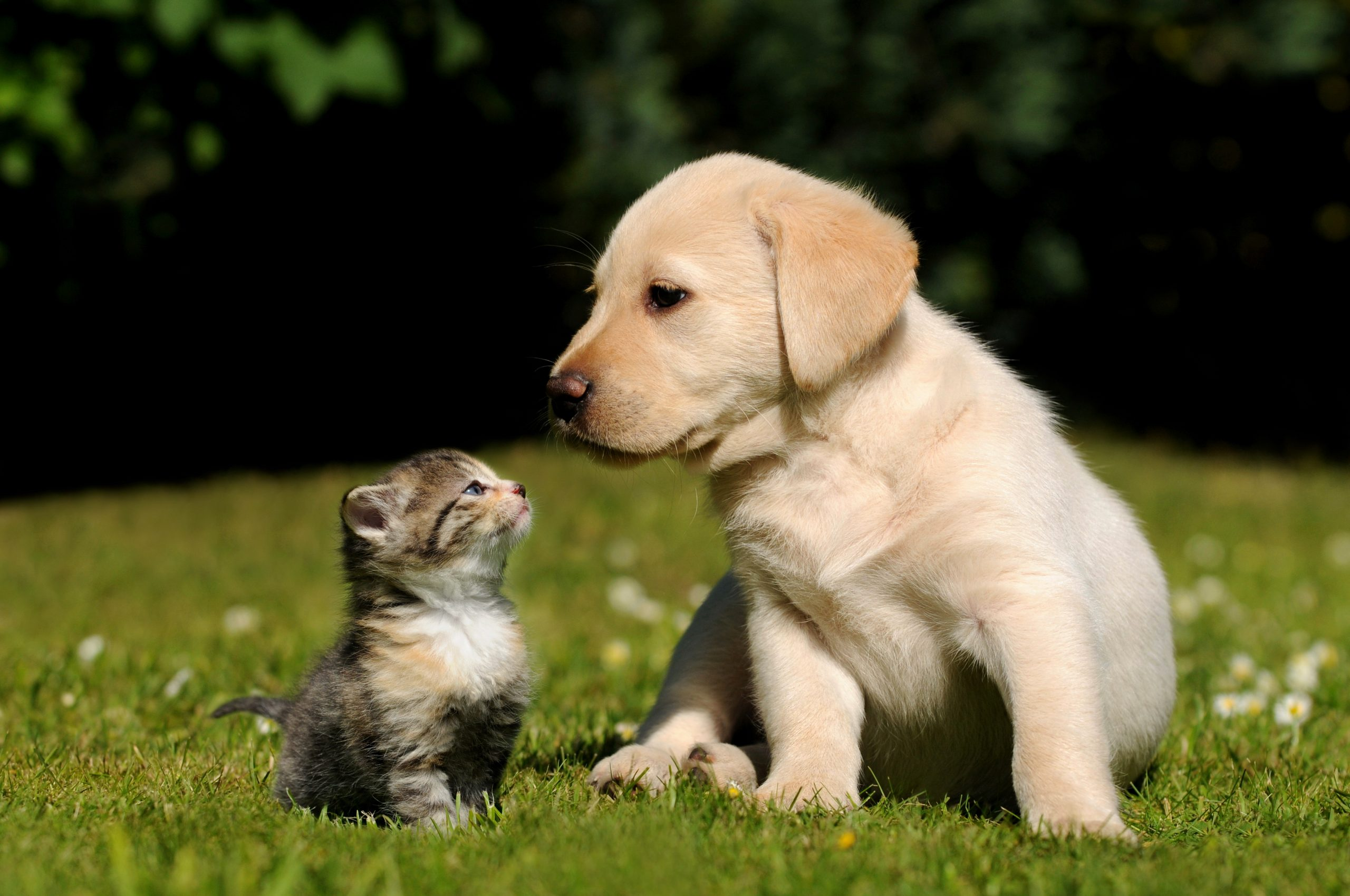 Shutterstock cat and dog