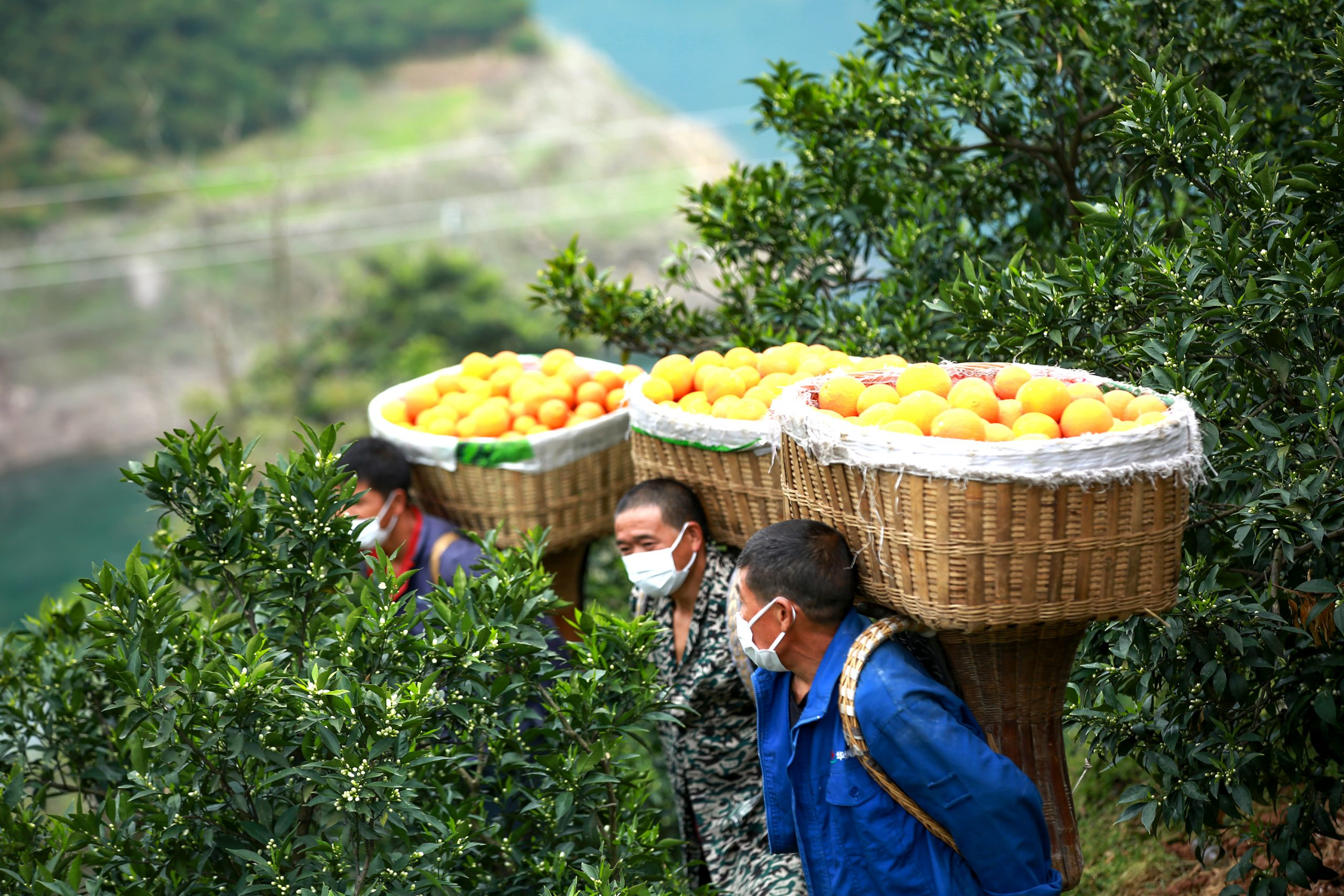 Farmers with fruits